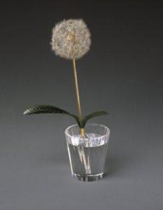 "Dandelion in a ""glass of water"""